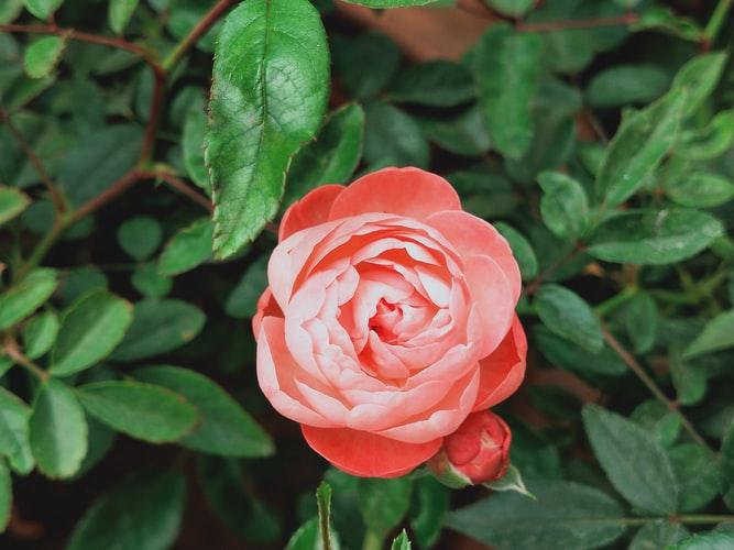 Roślina w ogrodzie zimowym